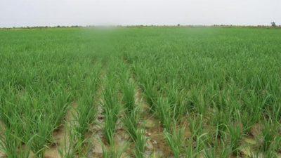 agriculture e1613827306925