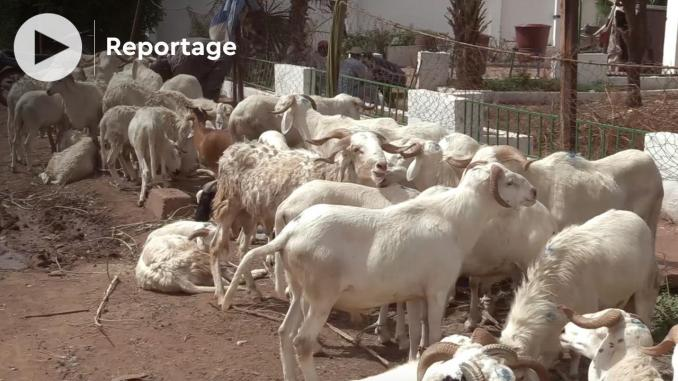 mali les moutons inaccessibles